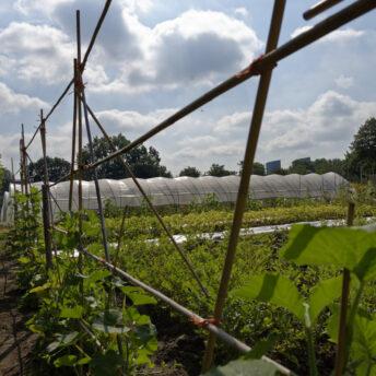 Planten en opknappen vrijwilligersruimte StadsTuinderij Piushaven | Jopiefonds